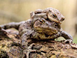 I Am AARP - Toad