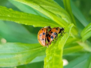 10 Reasons Why People Who Are Sentimental Have Beautiful Lives - Ladybugs