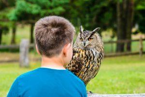 I Think I'm Drowning!   - Owls