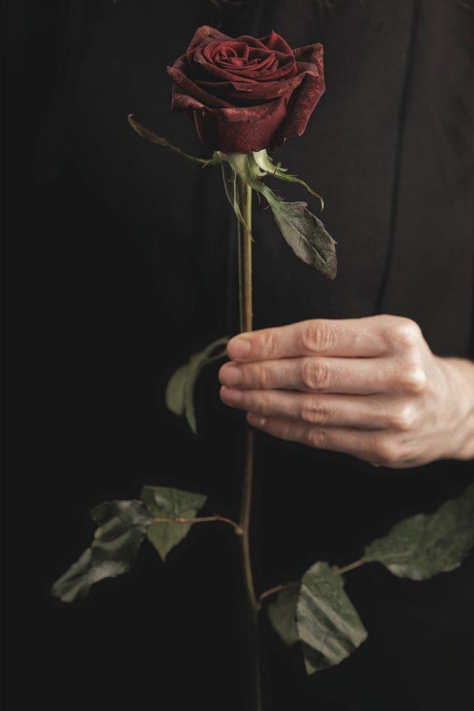Animals - Rose